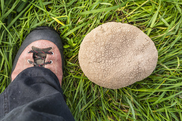 Comparing the size of the mushroom with the foot.