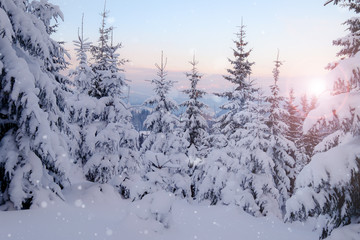 Winter mountain snowy forest