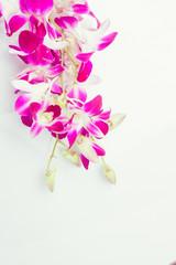 Purple orchids Thailand.
