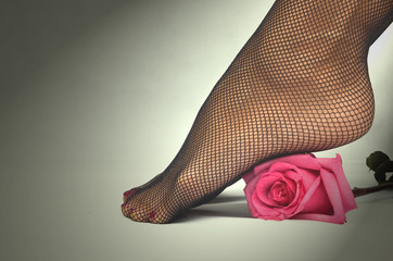 Sexy female feet in fishnet pantyhose stockings and rose flower isolated.