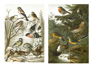 Illustrations of birds on a white background.