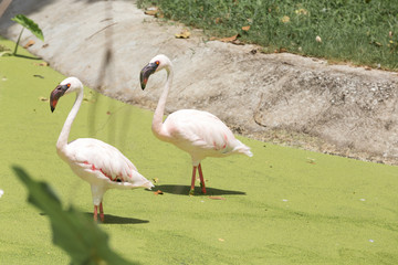 Pictures flamingo of animals Travel with family on holiday