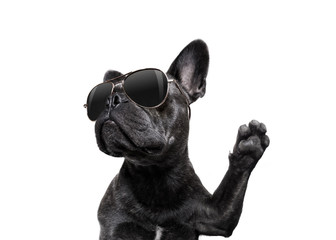 Poster Crazy dog posing dog with sunglasses high five