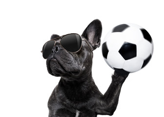 soccer player dog