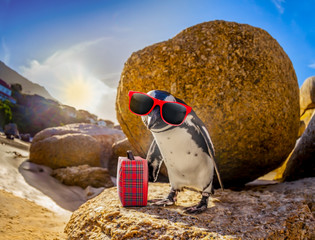 African Penguin with sunglasses at the beach