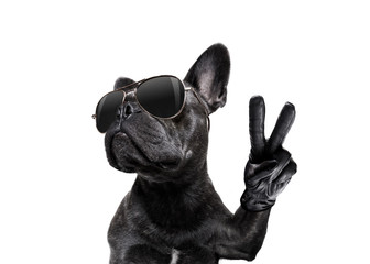 Stores photo Chien de Crazy posing dog with sunglasses and peace fingers
