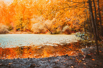 Soft view of autumn landscape, dry trees, golden sky, tree reflected in lake, seasons change, sunny day, autumnal park, fall nature.
