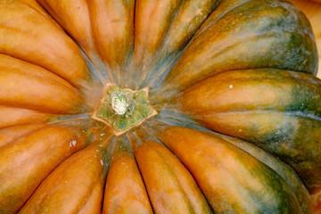 Garden Poster Kitchen Close-up von einem Kürbis