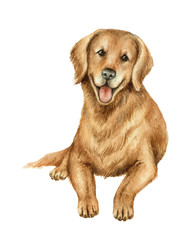 Watercolor vector retriever isolated on white background.