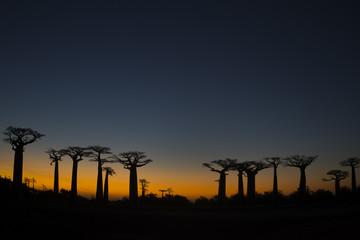Baobab Baeume im Sonnenuntergang