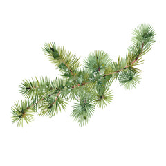 watercolor fir branch
