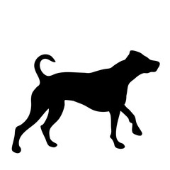 Vector silhouette of dog on white background.
