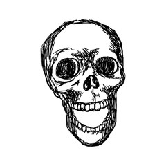 skull vector illustration sketch hand drawn with black lines, isolated on white background
