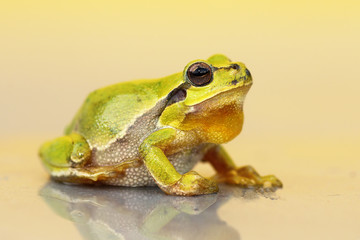 cute small green frog