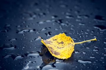 Gelbes Blatt im Regen