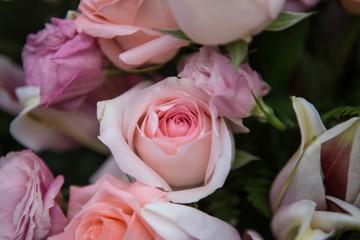 dramatic pink roses