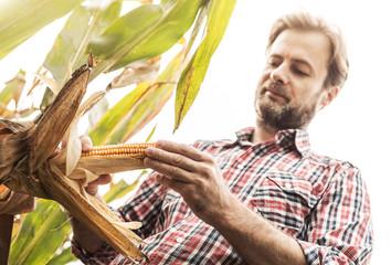 Caucasian farmer in plaid shirt control corn field