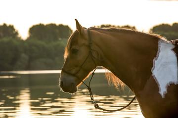 Pferd im Sonnenaufgang im See