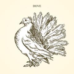 White decorative dove. Vintage style. Vector illustration