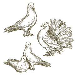 Set of doves. Vintage style. Vector illustration