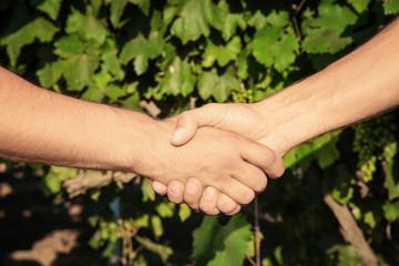 Two men shaking hands in vineyard