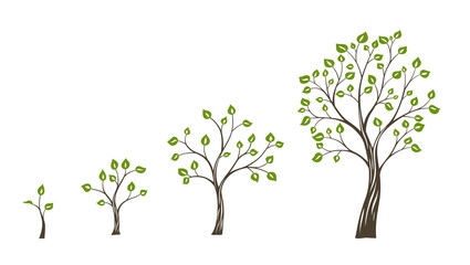 Green tree growth eco concept. Tree life cycle Fototapete