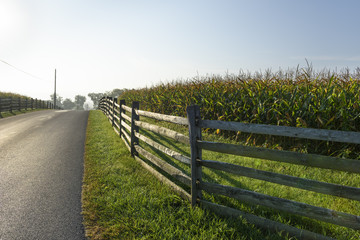 Split Rail Fence along Corn Field in Bright Morning Light