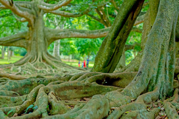 Royal Botanical Garden Peradeniya, Sri Lanka. The Botanical Garden Includes More Than 4000 Species Of Plants, Including Of Orchids, Spices, Medicinal Plants And Palm Trees