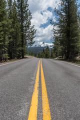 Road Through Pine Trees with Lassen Peak