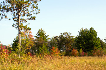 Autumn colors of trees and grasses in Necedah National Wildlife Refuge in Wisconsin