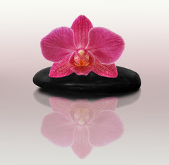Pink Orchid on stone