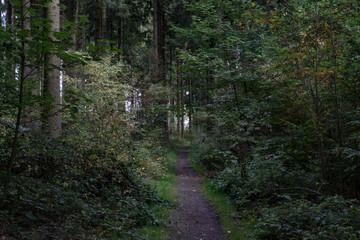 Waldpfad im Sauerland, Deutschland mit Herbststimmung