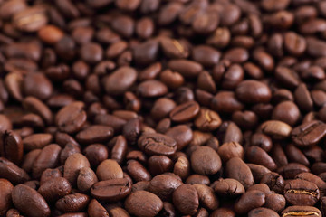Coffee Beans Isolated on white background. Close up Copy Space Concept