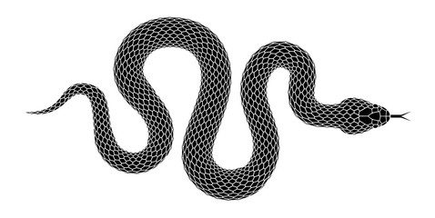 Vector snake silhouette isolated on a white background. Fototapete