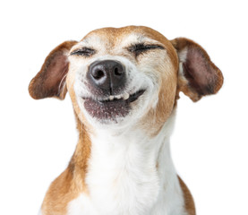 Spoed Fotobehang Hond Funny dog disgust, denial, disagreement face. Don't like that. grins teeth pet. White background