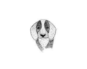 drawing illustration of beagle dog cartoon pencil and charcoal on paper art and pastel black sketch on white background