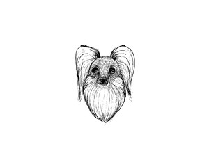 drawing illustration of papillon dog cartoon pencil and charcoal on paper art and pastel black sketch on white background