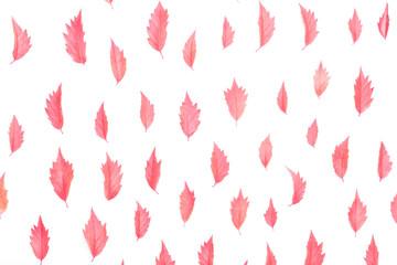 Autumn floral background