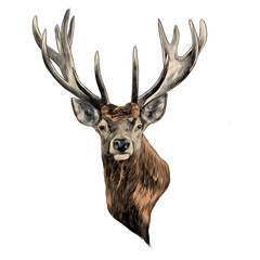 stag deer head sketch vector graphics color picture