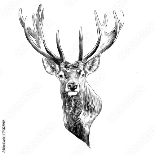 stag deer head sketch vector graphics monochrome black and white