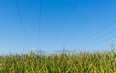 Stromleitungen über Maisfeld Fotoväggar