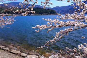 Biwa Lake and cherry in Shiga prefecture