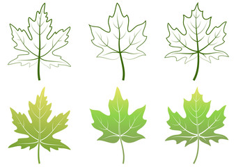 Maple Green Leaves and Contour Pictograms Isolated on White Background. Vector