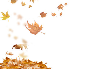 falling leaves in autumn background isolated space for your text