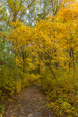 Path in the woods during peak Fall foliage