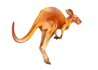 painted Australian animal kangaroo on a white background