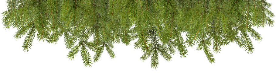 Pine branches christmas decoration isolated with space for your text