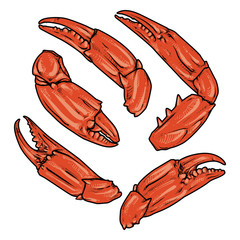 claws isolated on white background. vector. crab with clipping path. seafood.