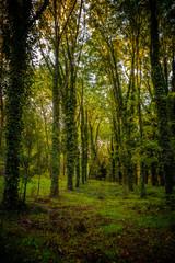 Woods in San Vittorino