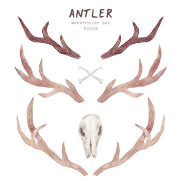 Watercolor antler collection